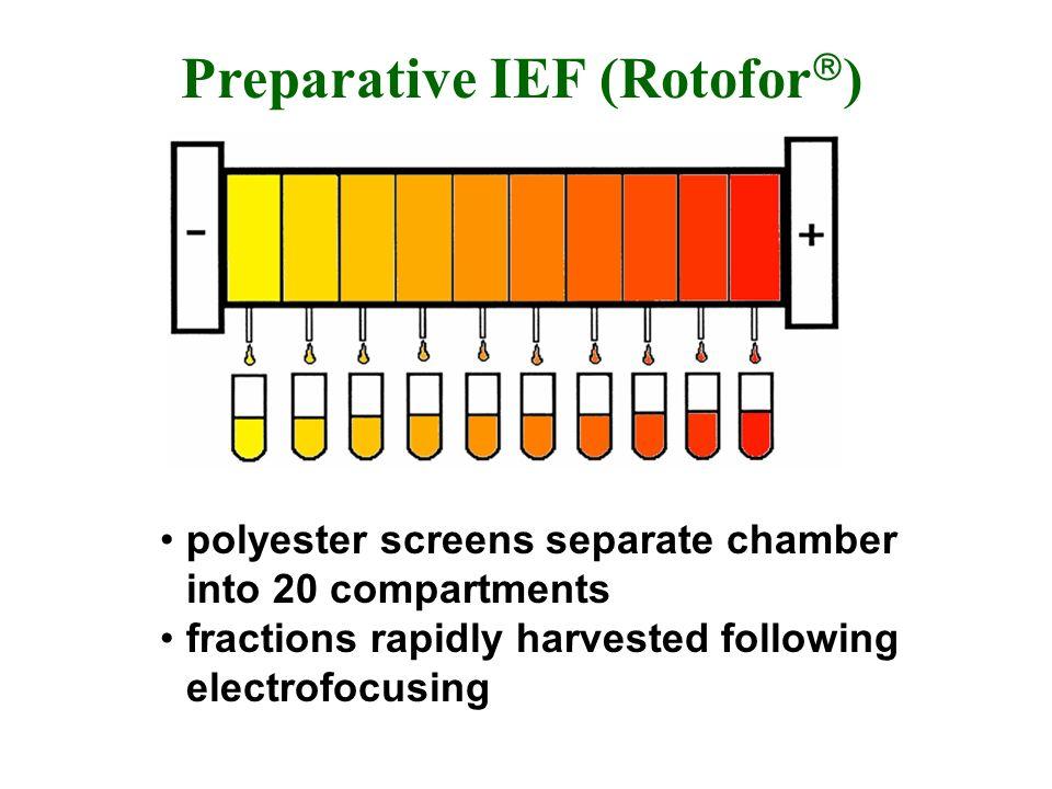 Preparative IEF (Rotofor)