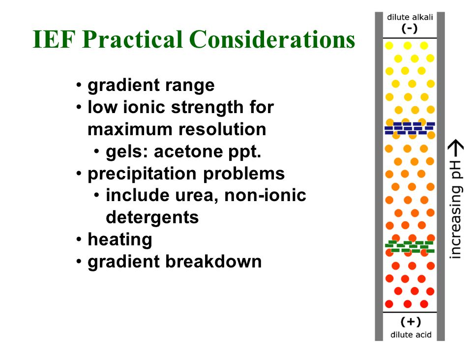 IEF Practical Considerations