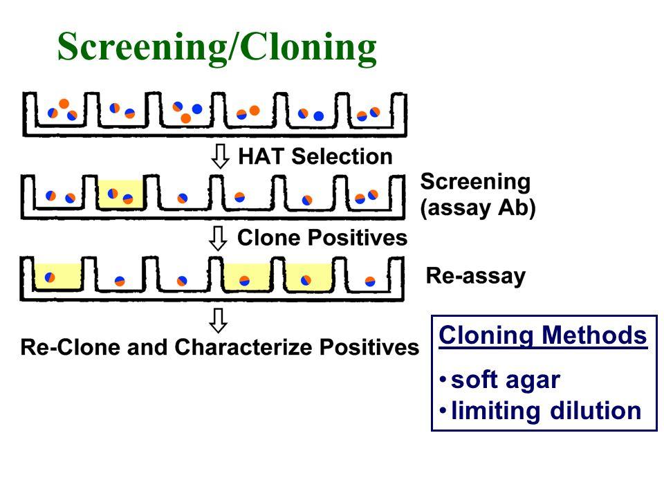 Screening/Cloning Cloning Methods soft agar limiting dilution