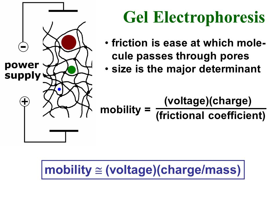 Gel Electrophoresis mobility  (voltage)(charge/mass)