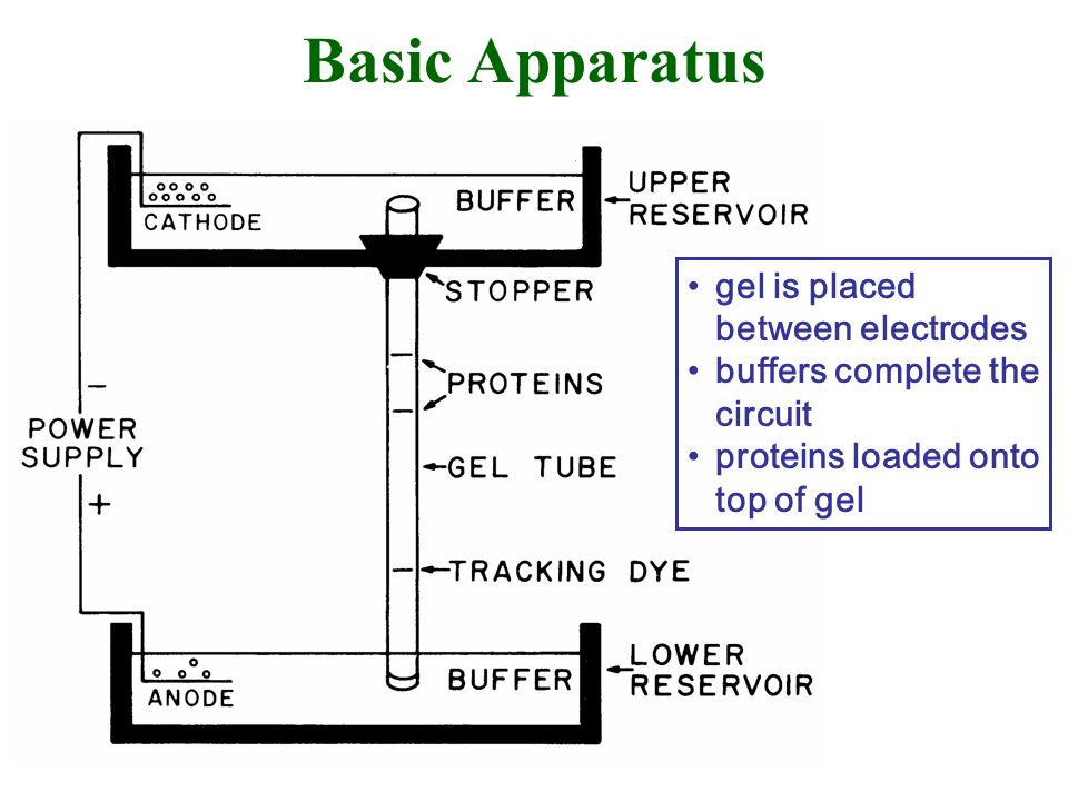 Basic Apparatus gel is placed between electrodes