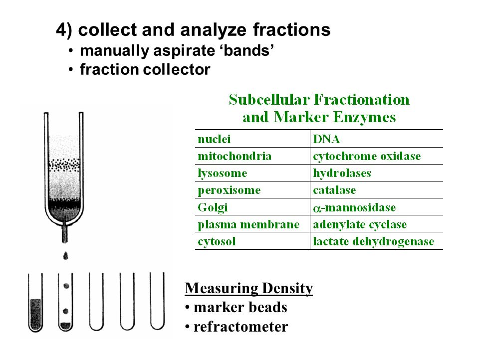 4) collect and analyze fractions