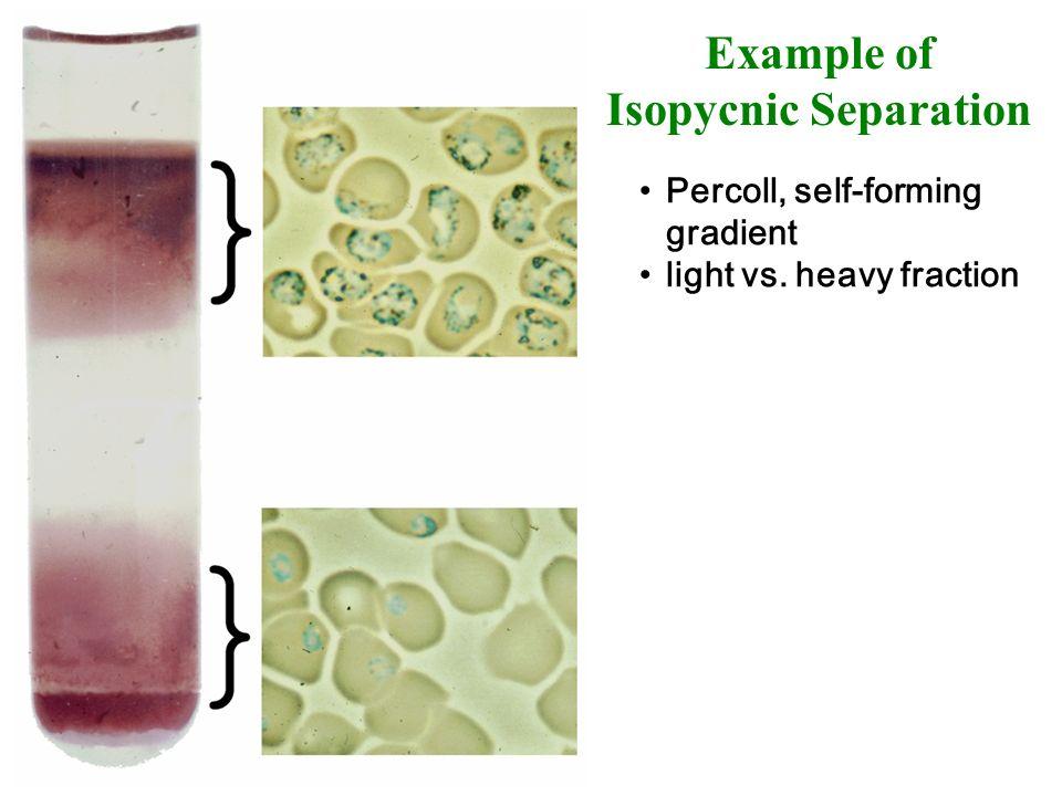 Example of Isopycnic Separation