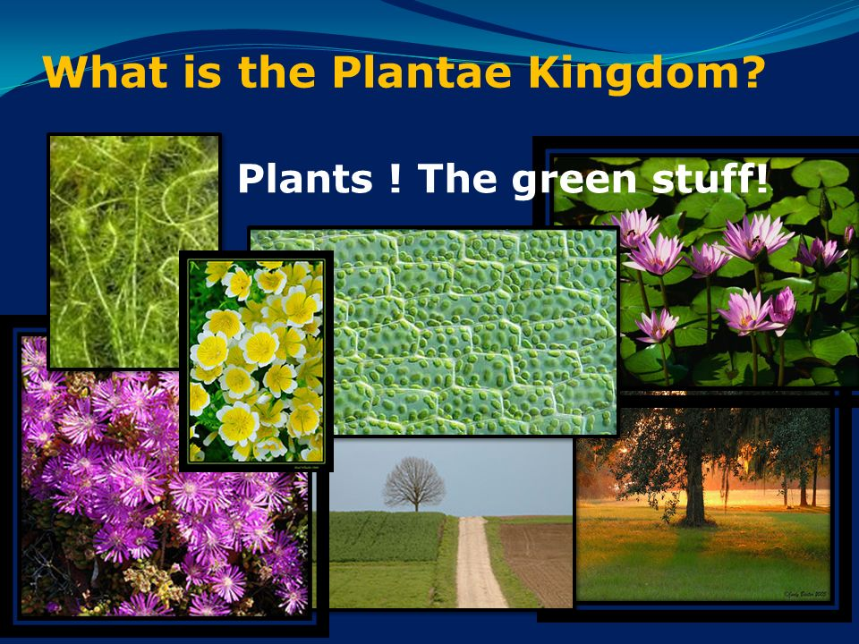 Image result for the green kingdom plants