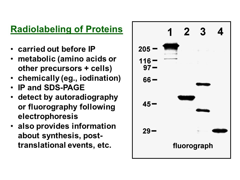 Radiolabeling of Proteins