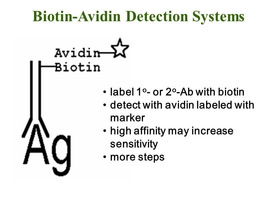 Biotin-Avidin Detection Systems