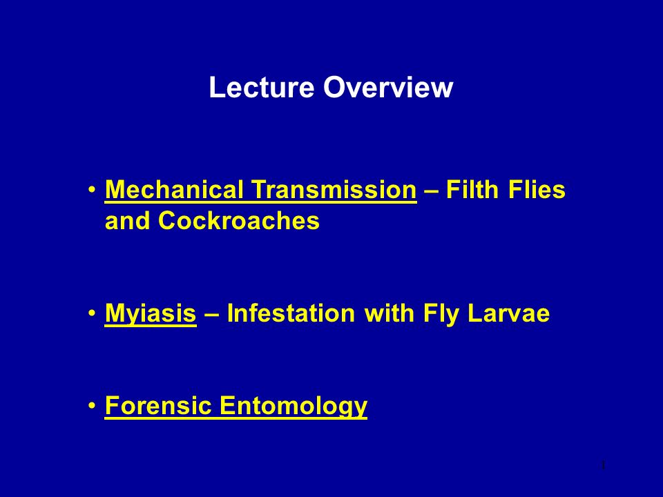 Lecture Overview Mechanical Transmission – Filth Flies and Cockroaches