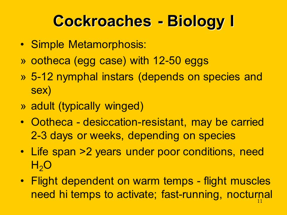 Cockroaches - Biology I