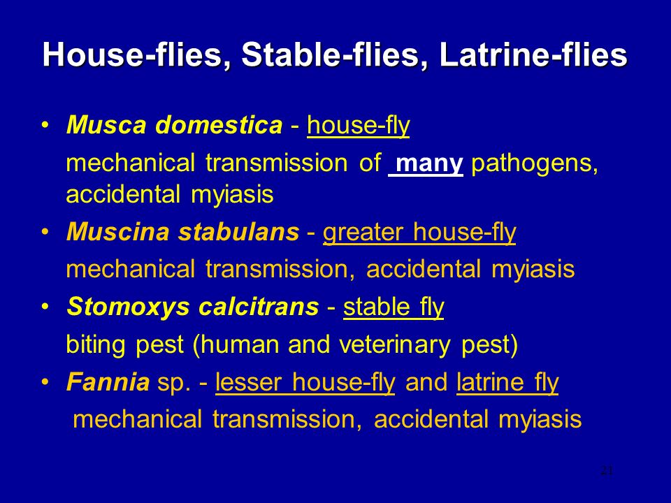 House-flies, Stable-flies, Latrine-flies