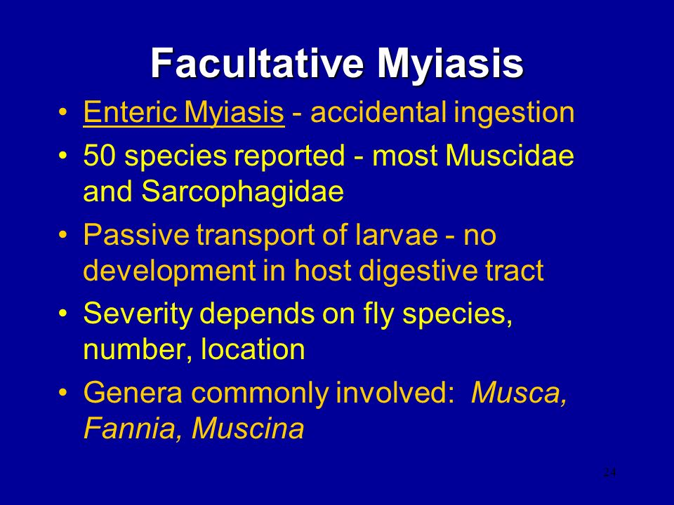 Facultative Myiasis Enteric Myiasis - accidental ingestion