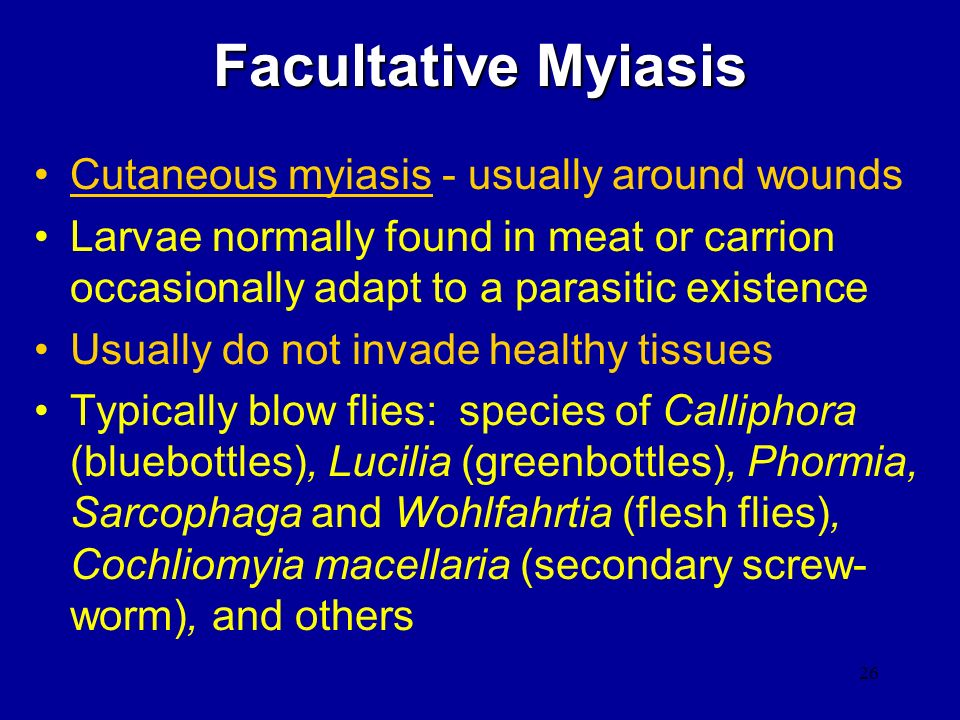 Facultative Myiasis Cutaneous myiasis - usually around wounds