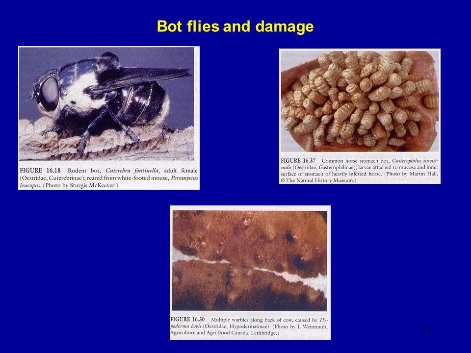 Bot flies and damage