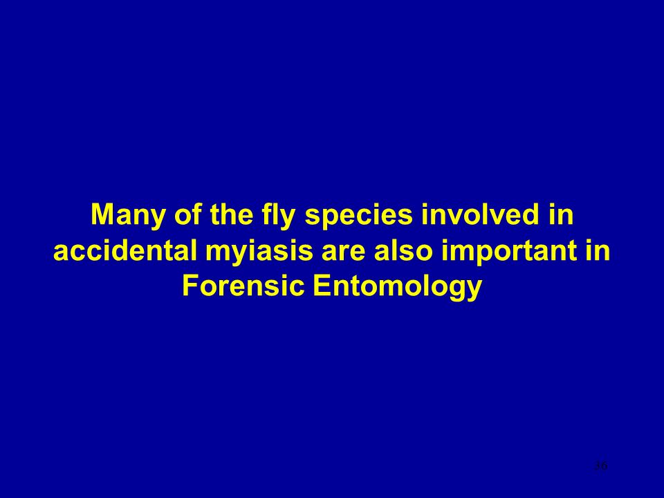 Many of the fly species involved in accidental myiasis are also important in Forensic Entomology