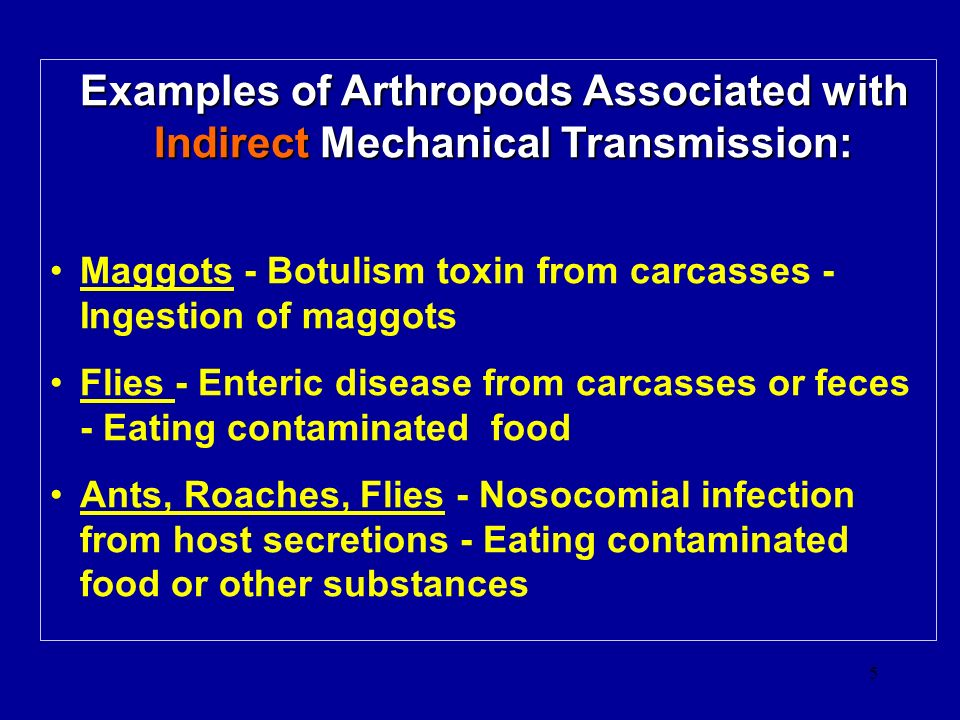 Examples of Arthropods Associated with Indirect Mechanical Transmission: