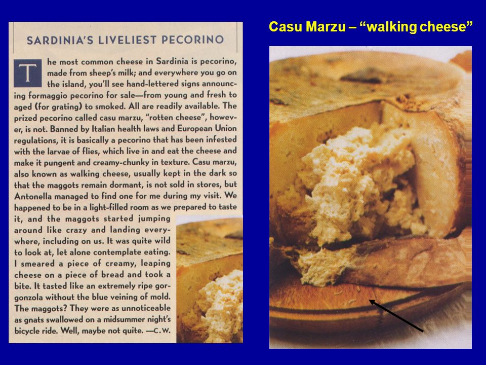 Casu Marzu – walking cheese