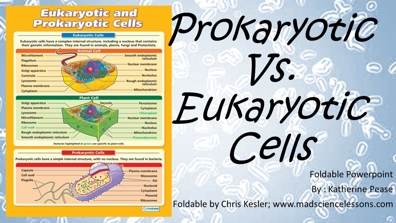 Prokaryotic Vs. Eukaryotic Cells - ppt video online download