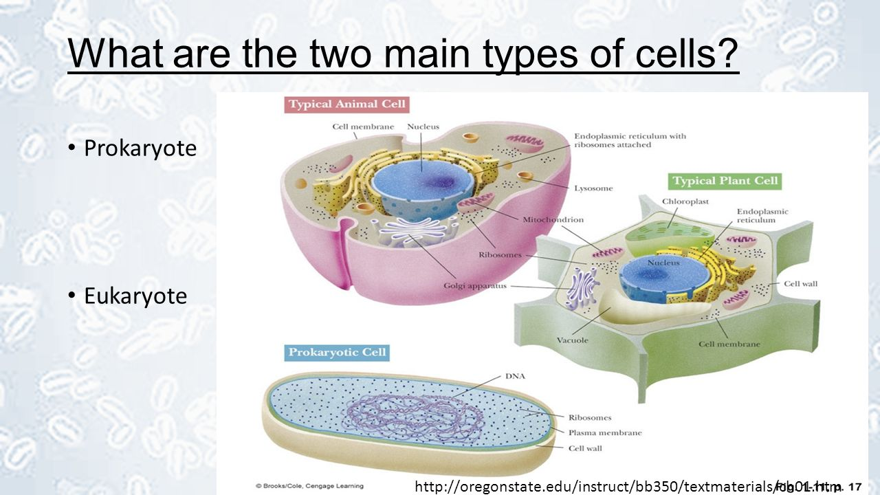 Prokaryotic Vs Eukaryotic Cells  Ppt Video Online Download. Air Conditioning Units Comparison. Best California University Life Flight Miami. Research Paper On Schizophrenia. File Transfer Websites How Much Is Uk Pension. Get Advertising On Your Website. Rate Financial Advisors Nurse Practitioner Dc. Solicitation Of Prostitution. Stock And Options Solutions The American Can