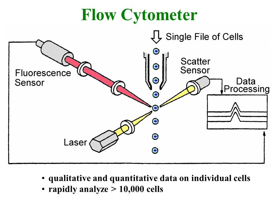 Flow Cytometer qualitative and quantitative data on individual cells