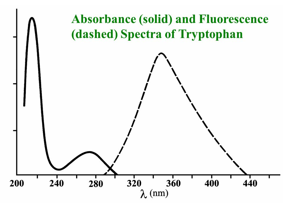 Absorbance (solid) and Fluorescence (dashed) Spectra of Tryptophan
