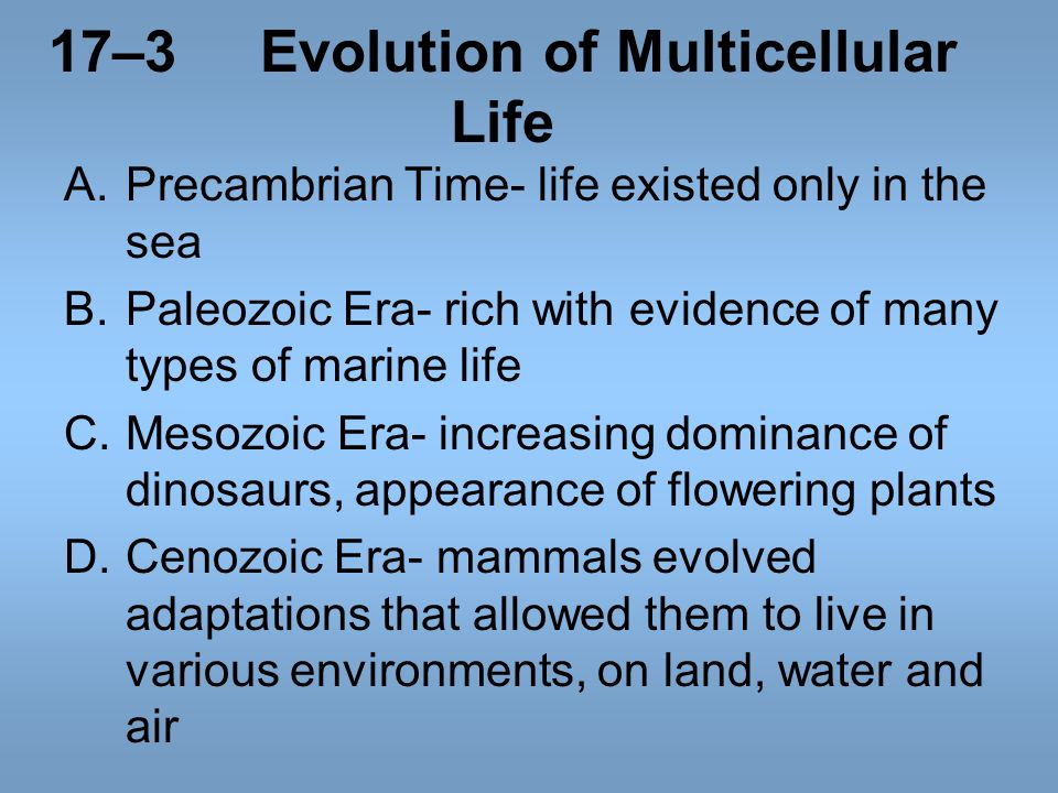 17–3 Evolution of Multicellular Life