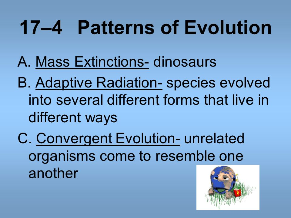 17–4 Patterns of Evolution