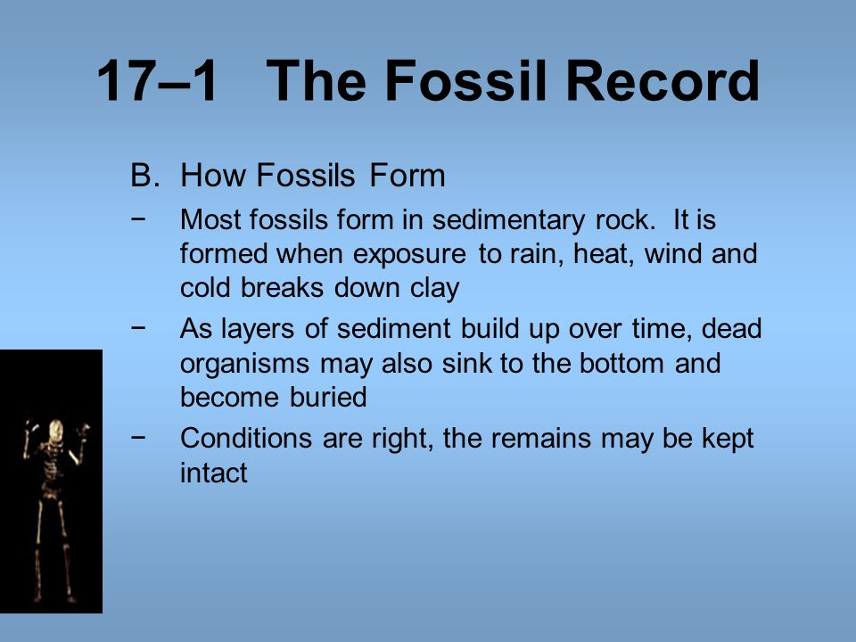 17–1 The Fossil Record How Fossils Form