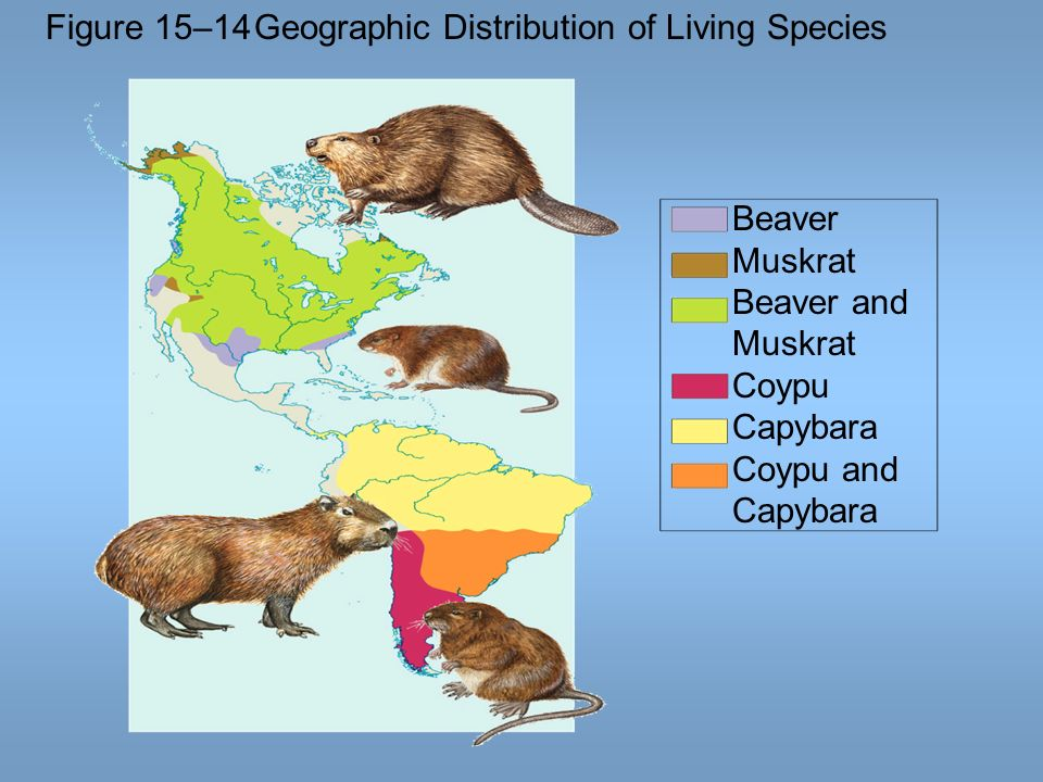 Figure 15–14 Geographic Distribution of Living Species