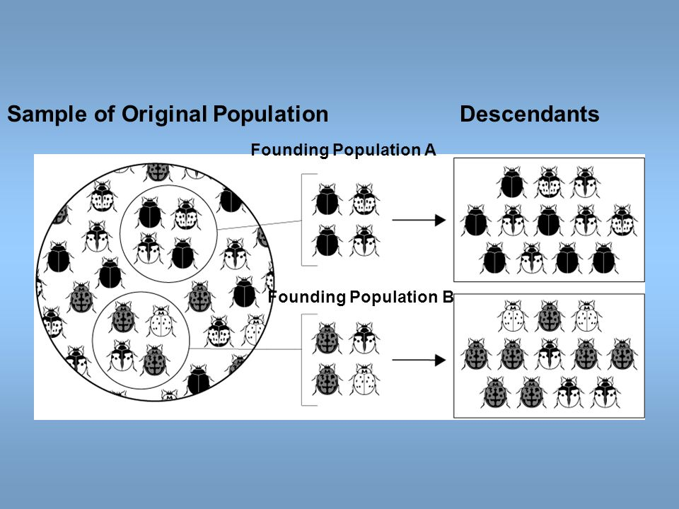 Sample of Original Population Descendants