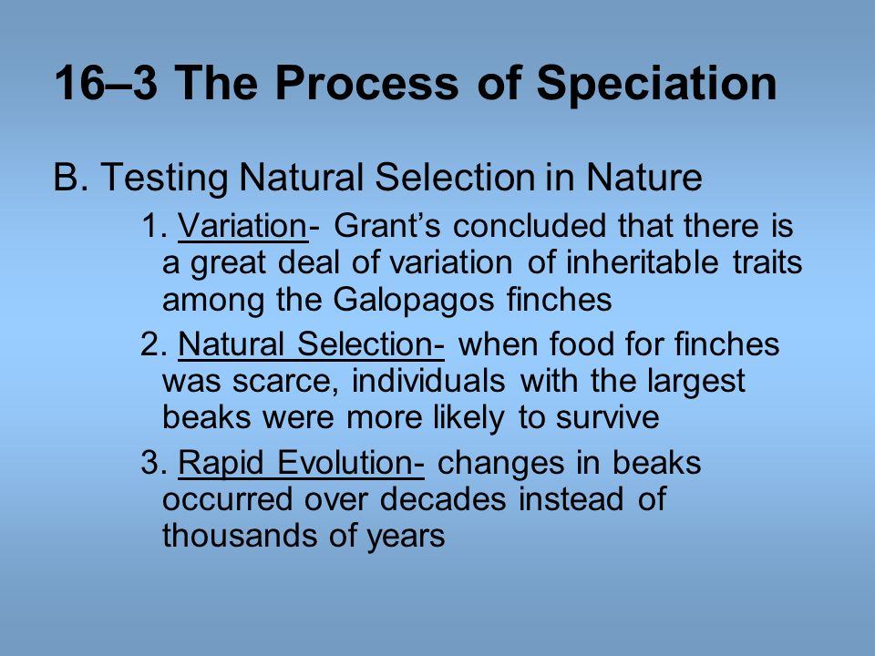 16–3 The Process of Speciation