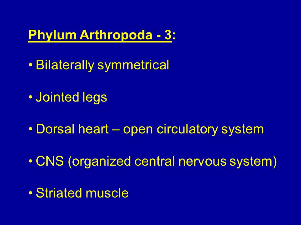 Phylum Arthropoda - 3: Bilaterally symmetrical. Jointed legs. Dorsal heart – open circulatory system.