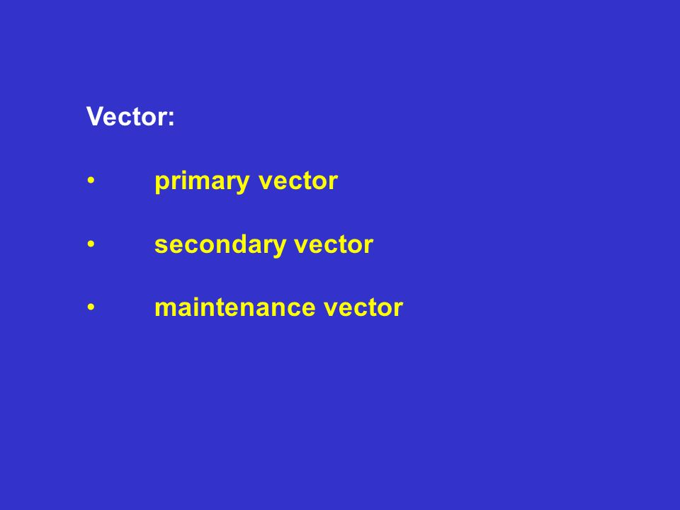 Vector: primary vector secondary vector maintenance vector