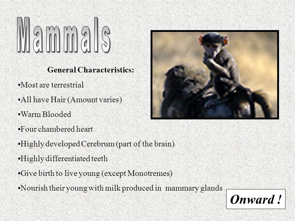 Mammals Onward ! General Characteristics: Most are terrestrial