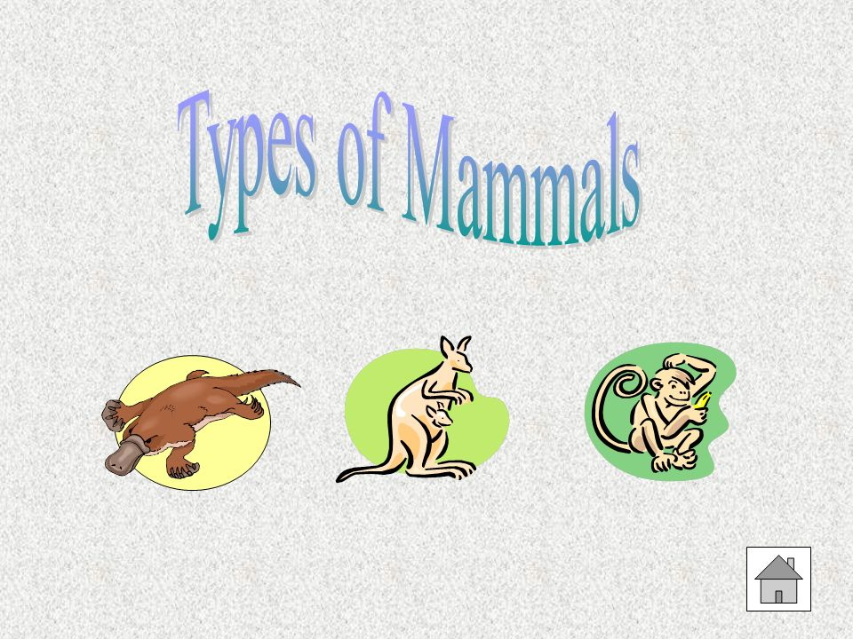 Types of Mammals