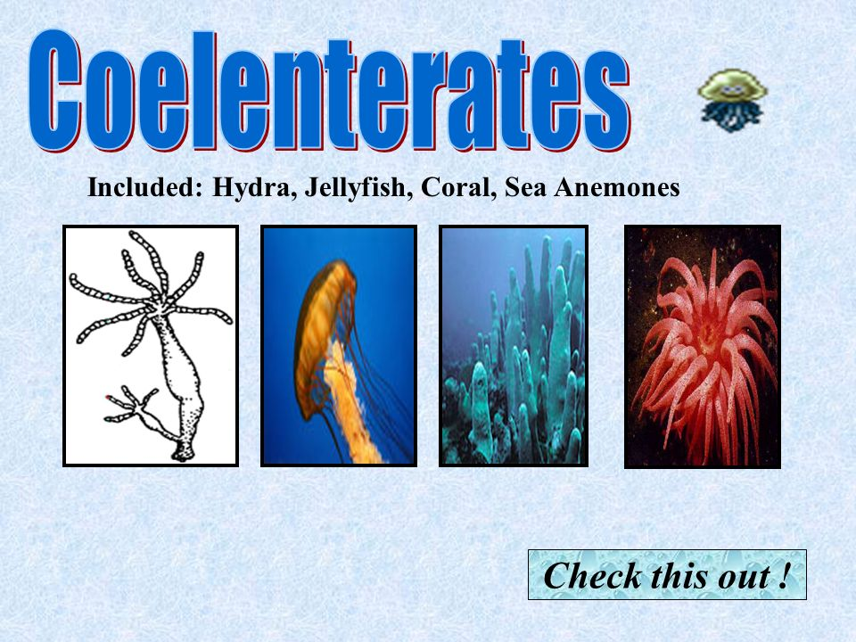 Coelenterates Check this out !