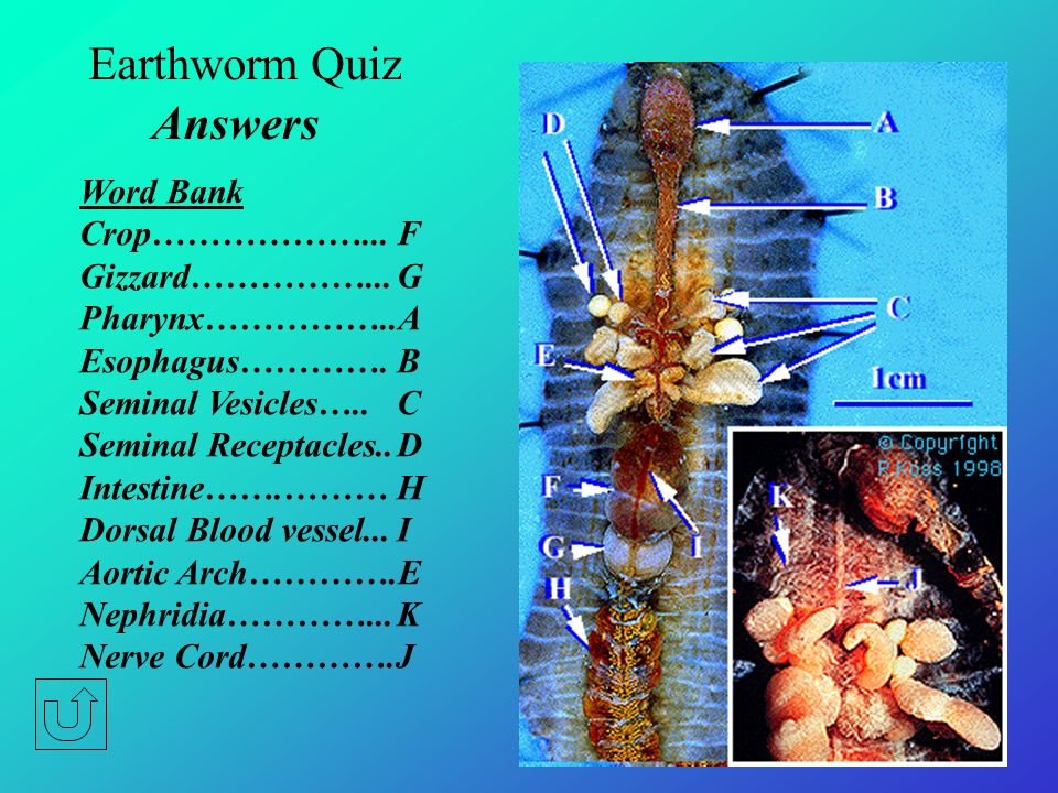 Earthworm Quiz Answers Word Bank Crop………………... F Gizzard……………... G