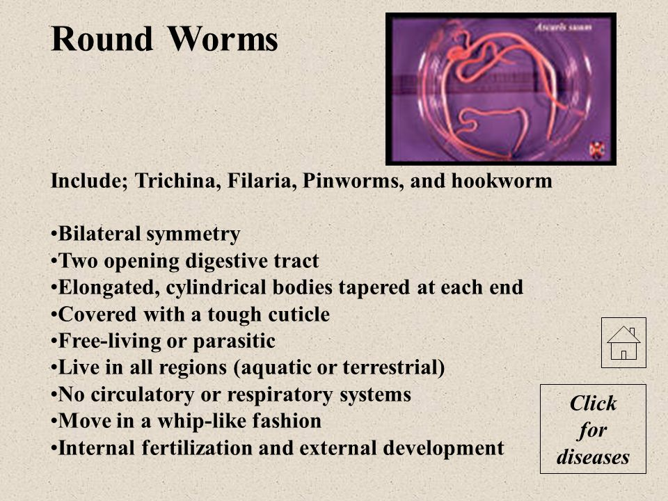 Round Worms Include; Trichina, Filaria, Pinworms, and hookworm