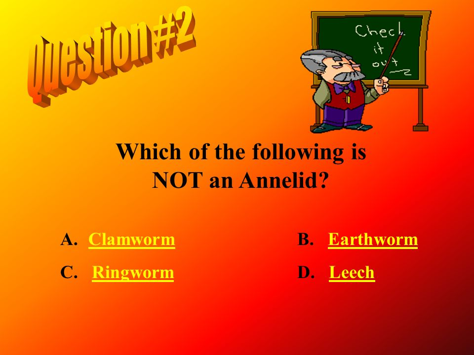 Which of the following is NOT an Annelid