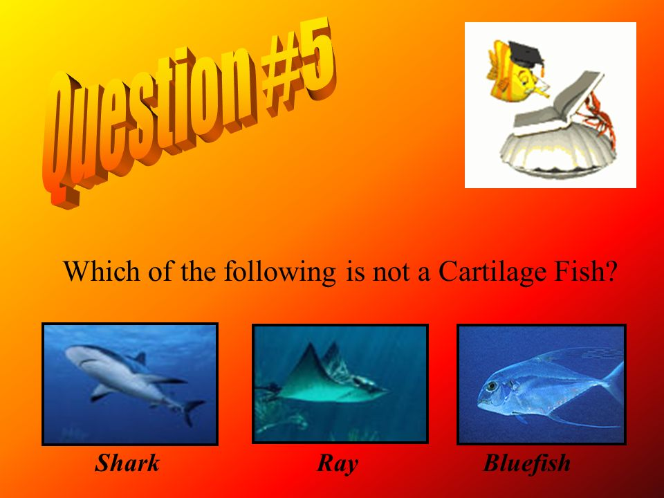 Question #5 Which of the following is not a Cartilage Fish Shark Ray