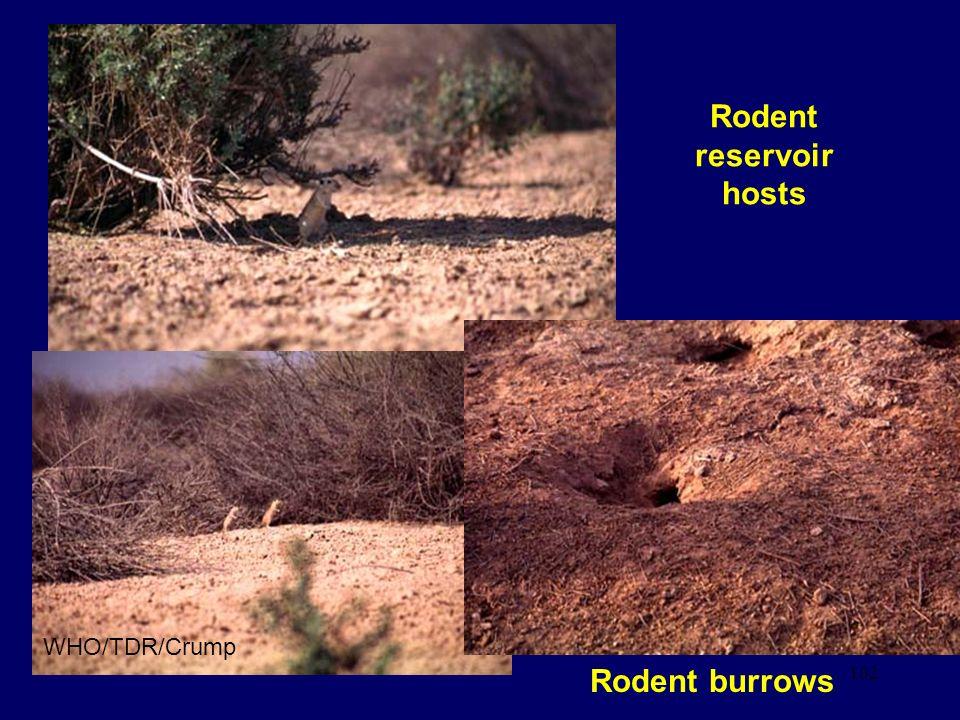Rodent reservoir hosts