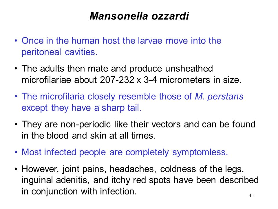 Mansonella ozzardi Once in the human host the larvae move into the peritoneal cavities.