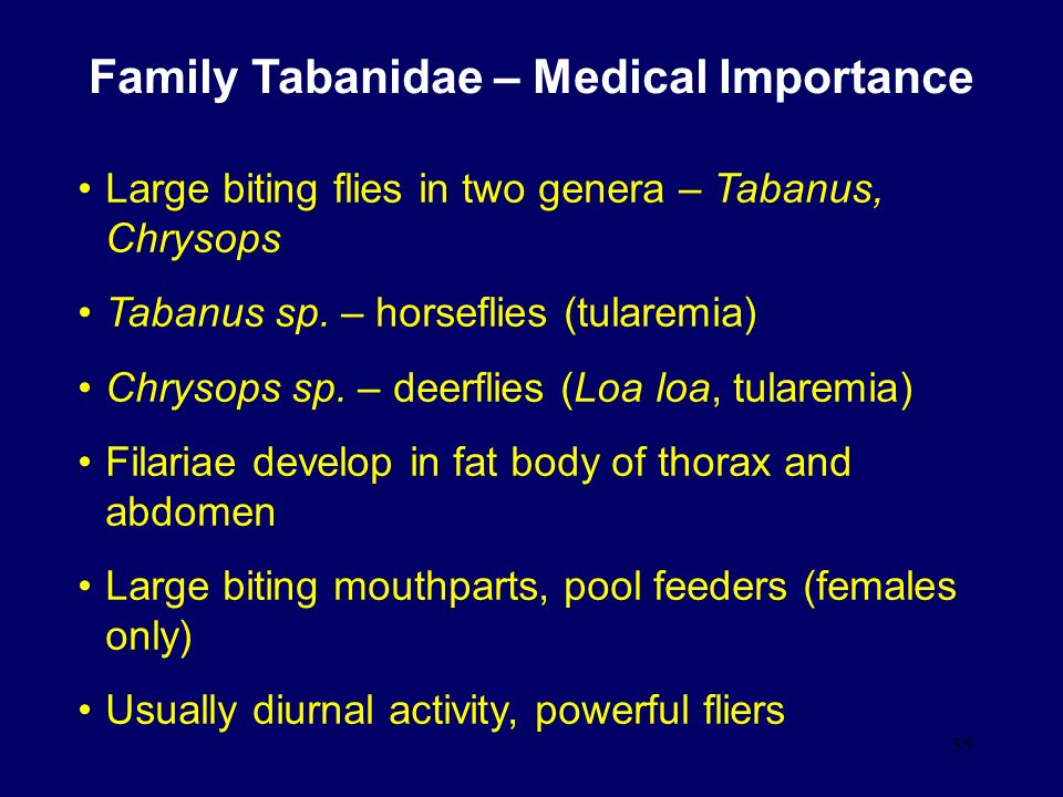 Family Tabanidae – Medical Importance