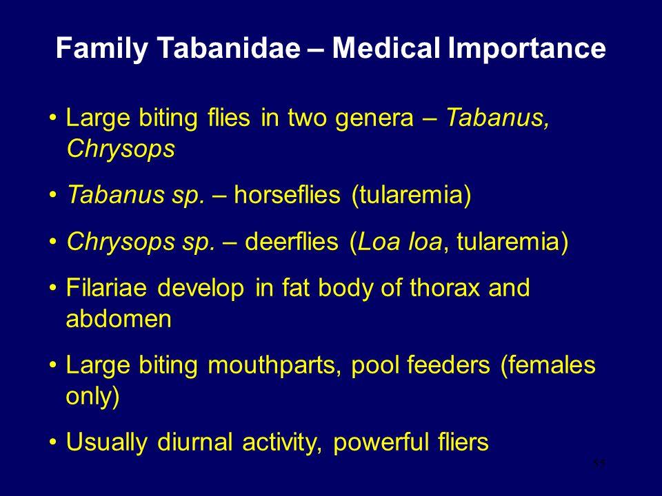 Family Tabanidae – Medical Importance