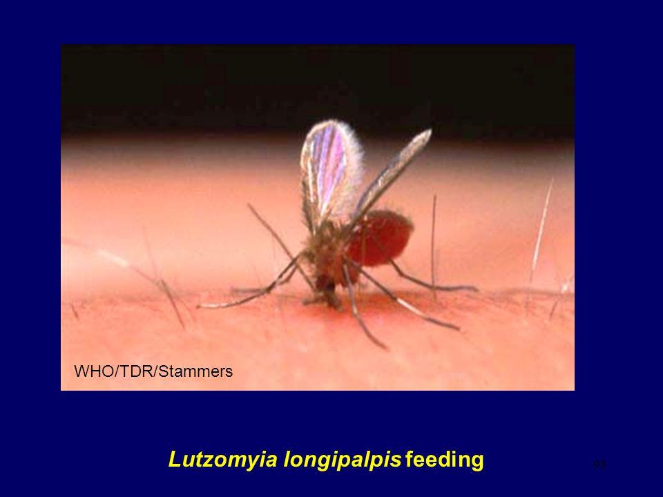 Lutzomyia longipalpis feeding
