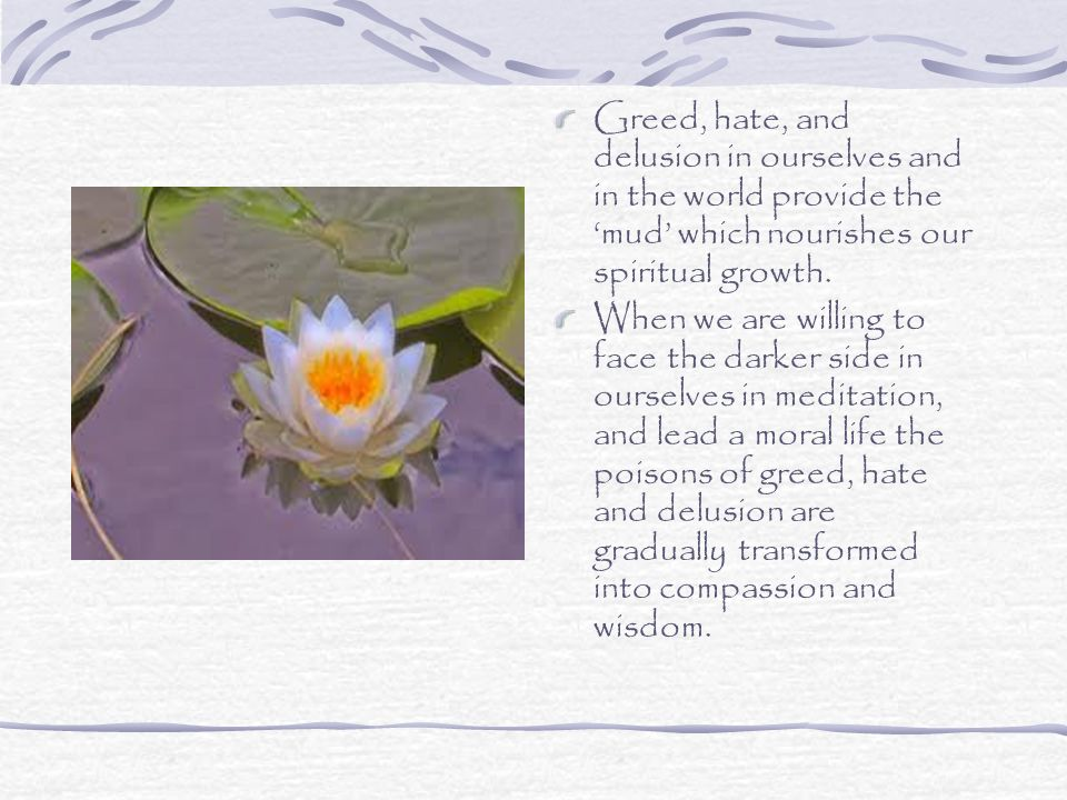 Greed, hate, and delusion in ourselves and in the world provide the 'mud' which nourishes our spiritual growth.