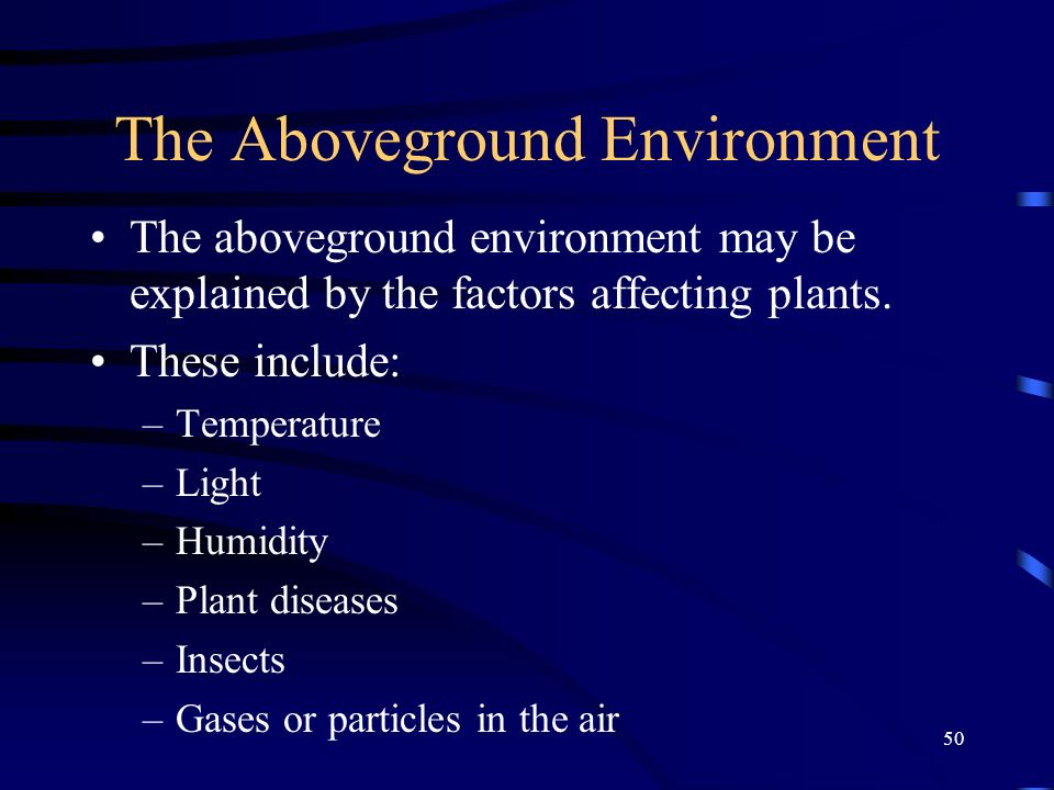 The Aboveground Environment