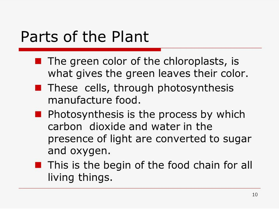 Parts of the Plant The green color of the chloroplasts, is what gives the green leaves their color.