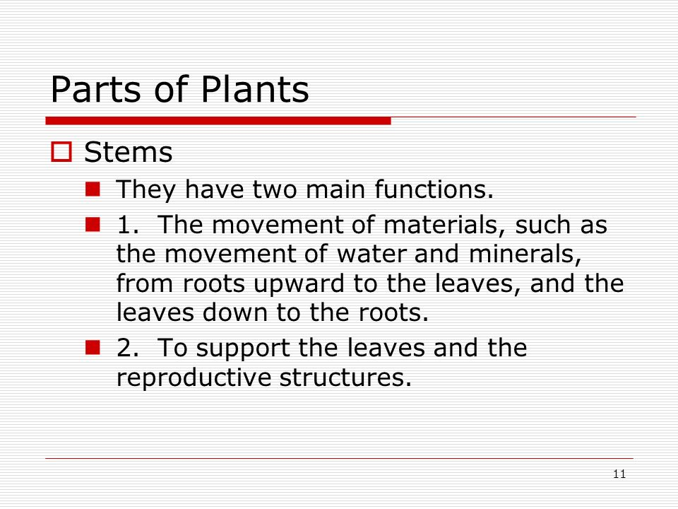 Parts of Plants Stems They have two main functions.