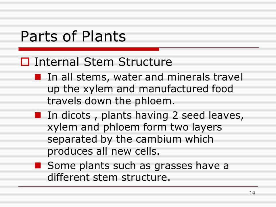 Parts of Plants Internal Stem Structure