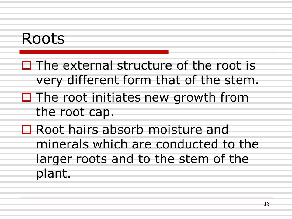 Roots The external structure of the root is very different form that of the stem. The root initiates new growth from the root cap.