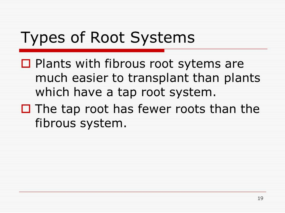 Types of Root Systems Plants with fibrous root sytems are much easier to transplant than plants which have a tap root system.